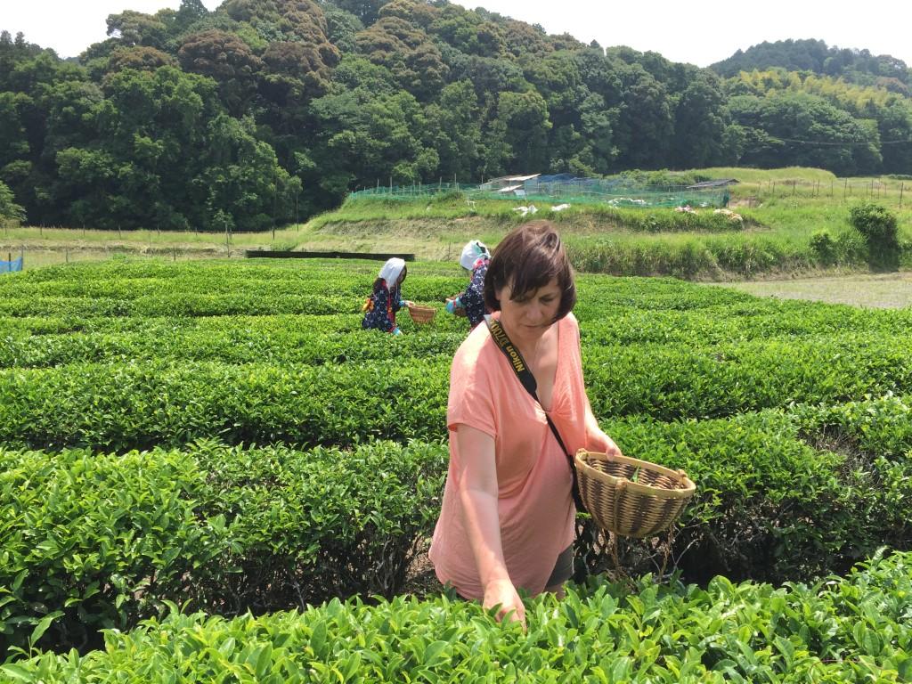 Simply Tea's Alexis Kaae har fået stor position i World Tea Organization